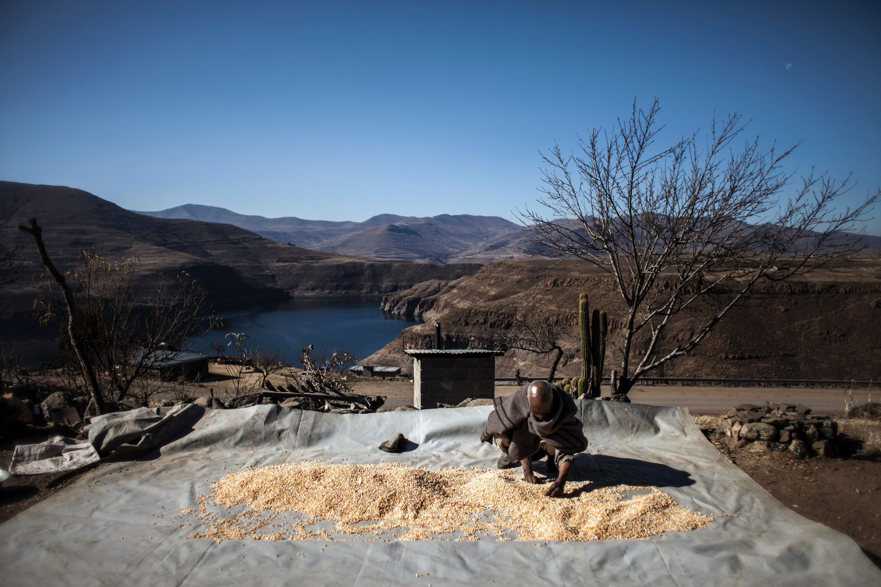 Mohlakoana Molise, a farmer in Lesotho, sorts the yield from his maize crop. Like much of Africa, Lesotho has been hit hard in 2016 by a drought associated with a strong El Niño event.