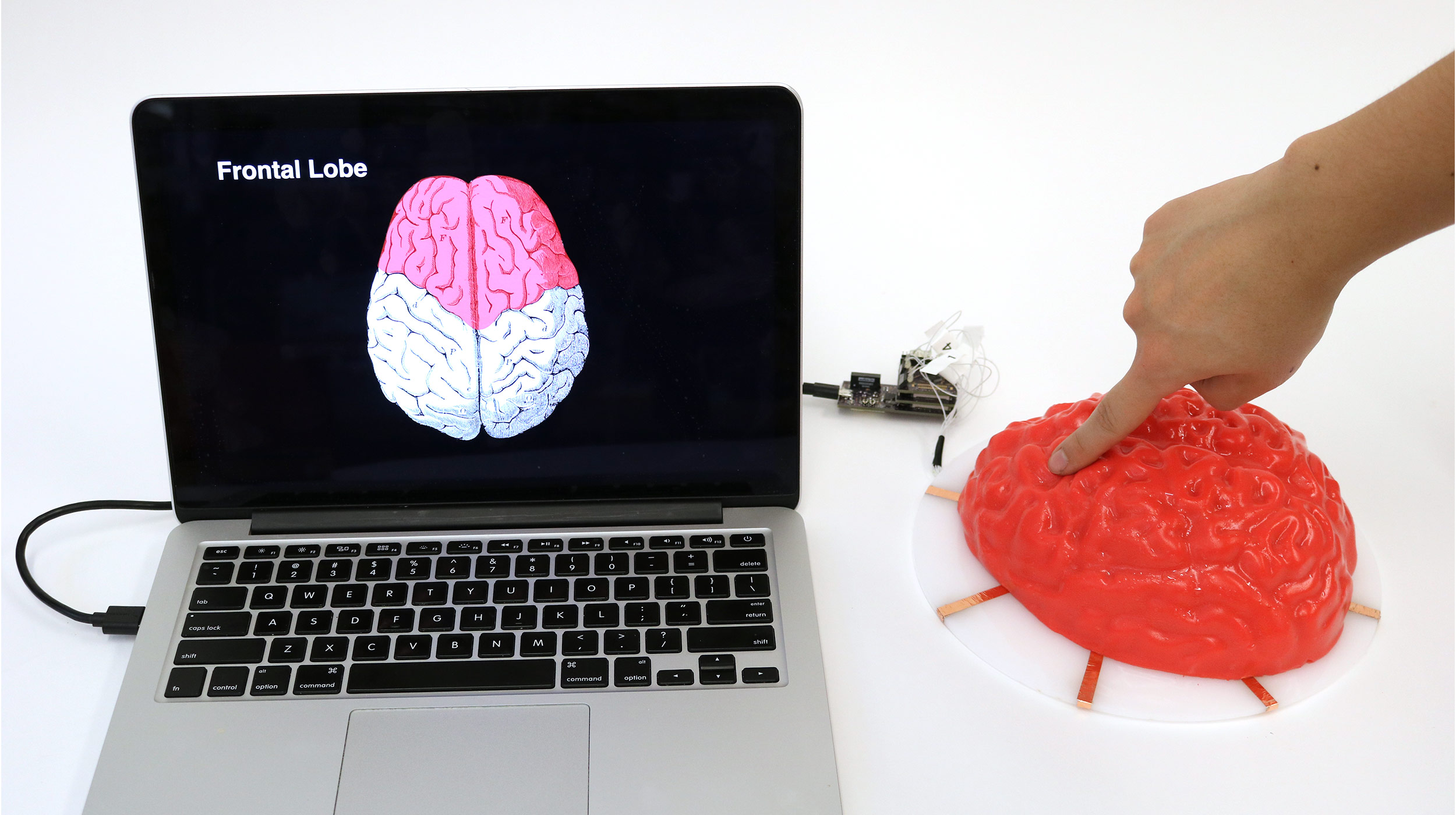Electrick can turn all kinds of objects, like this molded Jell-O brain, into touch pads.