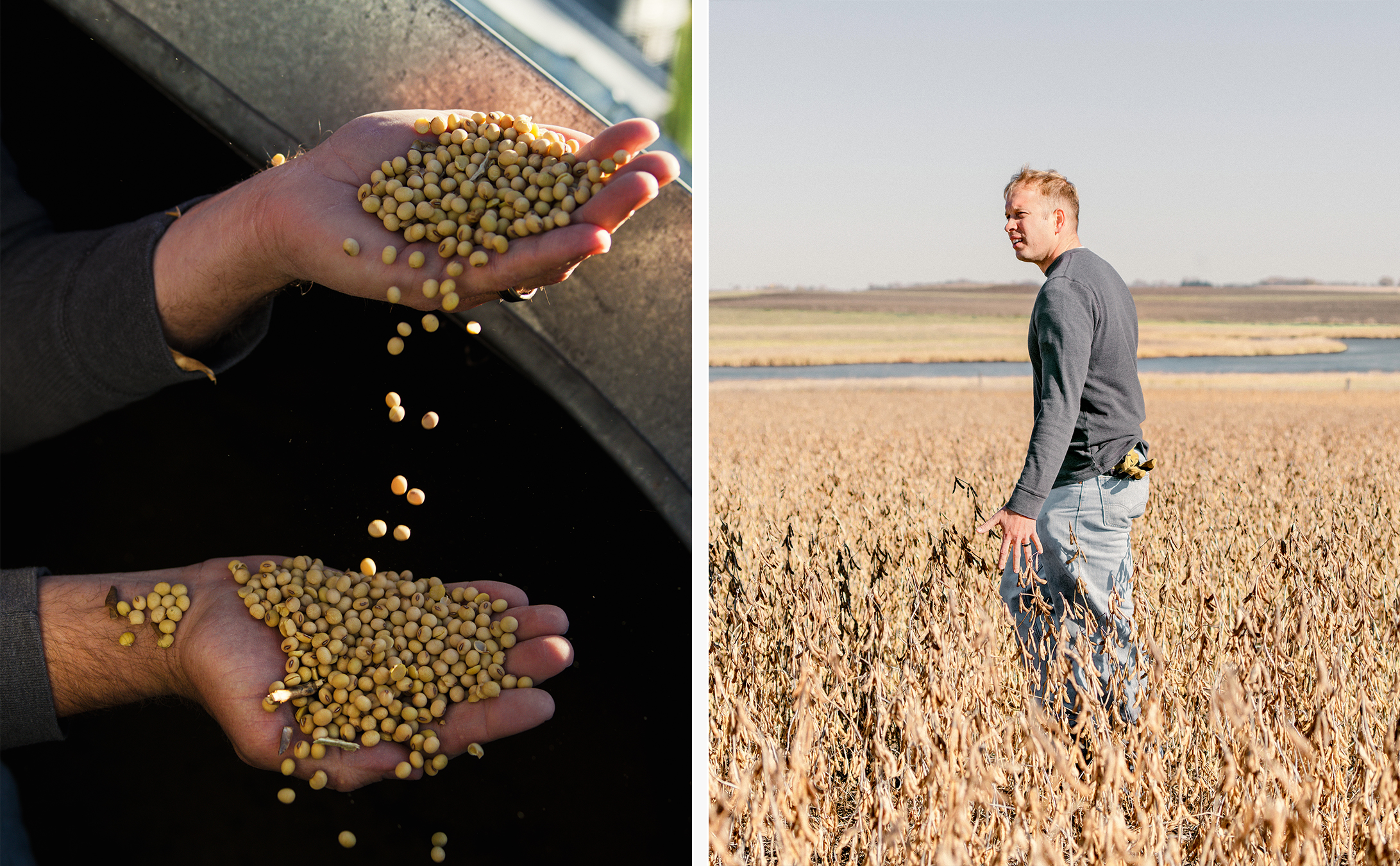 """<b><a href=""""https://www.technologyreview.com/s/609230/these-are-not-your-fathers-gmos/"""" target=""""_blank"""">These Are Not Your Father's GMOs </a></b> <br> Photographs by Matthew Hintz"""