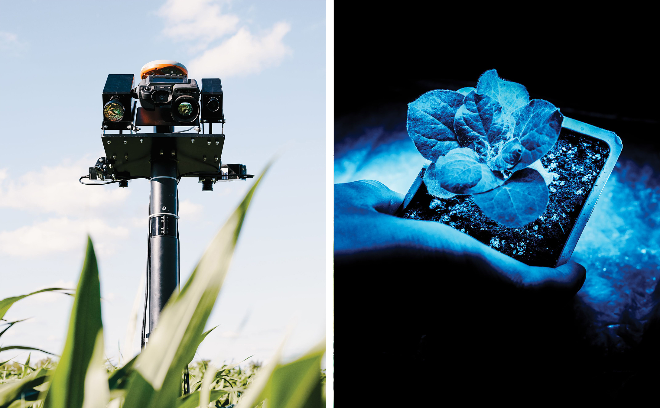"""<b><a href=""""https://www.technologyreview.com/s/608535/to-feed-the-world-improve-photosynthesis/ """" target=""""_blank"""">To Feed the World, Improve Photosynthesis </a></b> <br> Photographs by Whitten Sabbatini"""