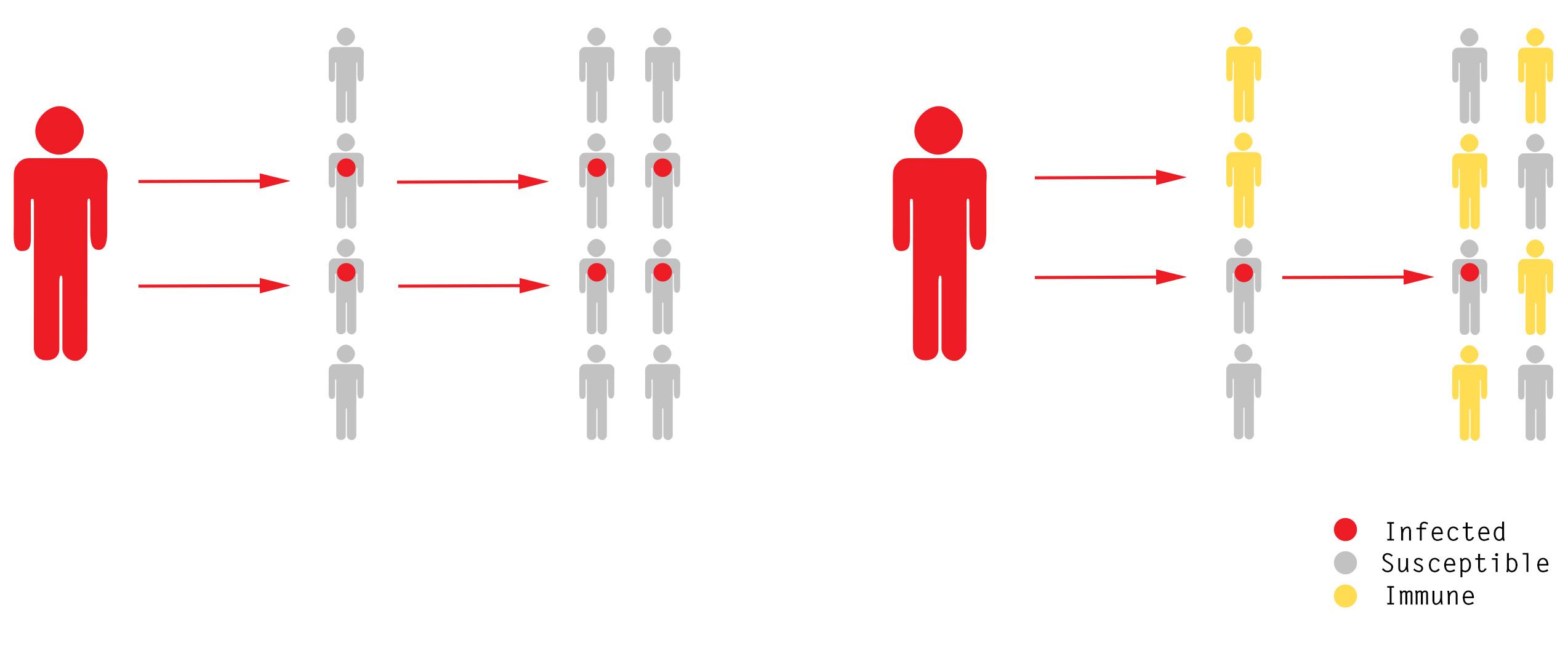 集団 免疫 コロナ