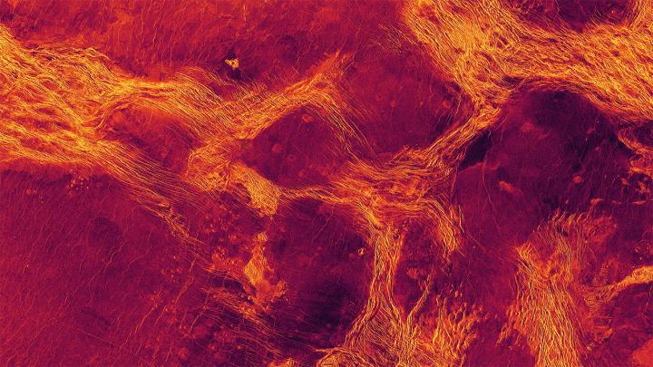 venus tectonics